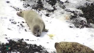 Малыш-белек и его трогательные игры со снегом покорили жителей Приморья