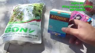 Đặc tính của thuốc kích thích sinh trưởng ga 3, naa, thiore, nitrophenol..