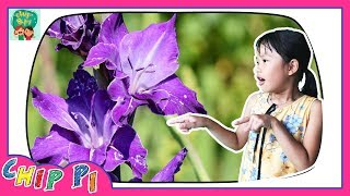 English Flower Names with Pictures Videos Learning for Kids