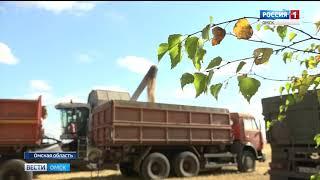 Аграрии Прииртышья намолотили более 3 миллионов тонн зерна