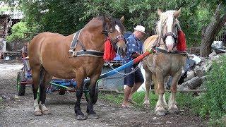 Caii lui Nea' Costel de la Cluj | Pregatire pentru expozitie - ep. 89 - 2018