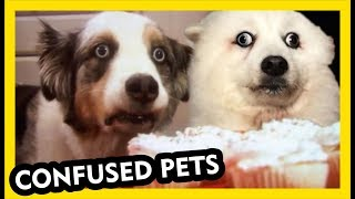 Confused Pets - Funniest Compilation Video Part 3