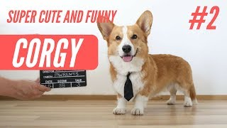 The Best of Funny and Super Cute Corgis 2019 - Part #2