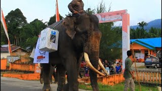 Sumatran elephants help out on election day in Indonesia