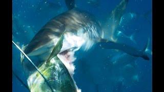 危険をかえりみずにサメを接写
