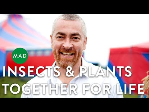 Alex Atala at MAD1: Insects & Plants  Together for Life