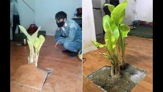 Bí ẩn về cây chuối mọc giữa phòng trọ khi sinh viên trở lại sau Tết