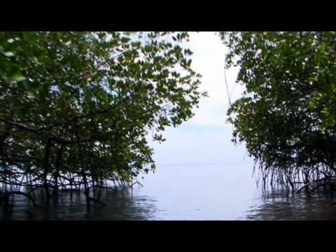 Victor Engel – Mangrove research in the Florida Everglades