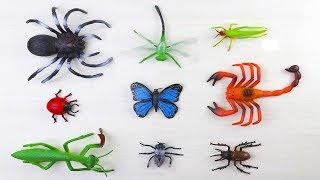 Bug Names For Kids / Insects Toys Collection / Educational Learning Video For kids