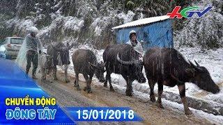 Trâu, bò chết rét, nhiều người dân gánh nợ | CHUYỂN ĐỘNG ĐÔNG TÂY - 15/01/2018