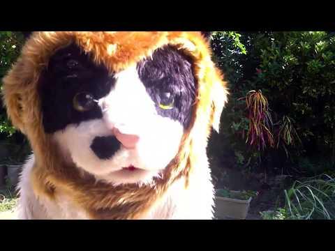 むぎ(猫)「今年のハロウィンはホントにホントにライオンだ!」の巻