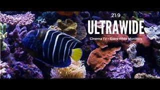 Ultrawide Screensaver for Cinema Displays 21:9 Aquarium