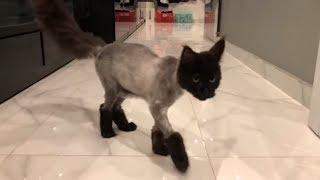 Vợ chồng Trấn Thành Hariwon mệt mỏi vì sự chảnh chó của con mèo Trấn Xì.