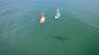 Dvije djevojke u bikinijima veslale su na surferskim daskama. Čekajte da vidite šta ih je vrebalo iz morskih dubina! (VIDEO)