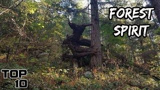 Top 10 Scary Creatures Seen In Forests