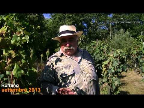 Coppia siciliana in viaggio di nozze- Nicola Donnantuoni Stizzo di Vino