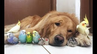 /cute parrots videos compilation cute moment of the animals soo cute 1
