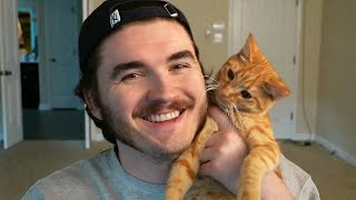 I adopted a cat.