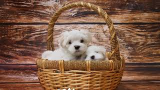 1 hour Sleep and relax Music For Dogs, Cats & All Pets, Stress Relief, Anxiety Healing Music 0040