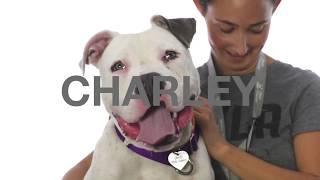 Adopt Charley at NKLA