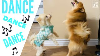 Funny Dancing Dogs Compilation | Try Not to Laugh