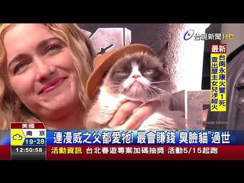 連漫威之父都愛牠!最會賺錢臭臉貓過世