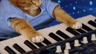 Keyboard Cat -