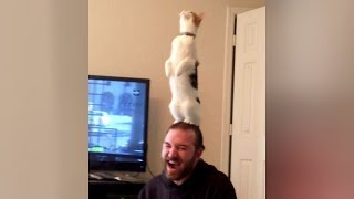 Are this the BEST CAT FAILS YOU'VE EVER SEEN or what?! - Extremely FUNNY CAT compilation - YouTube