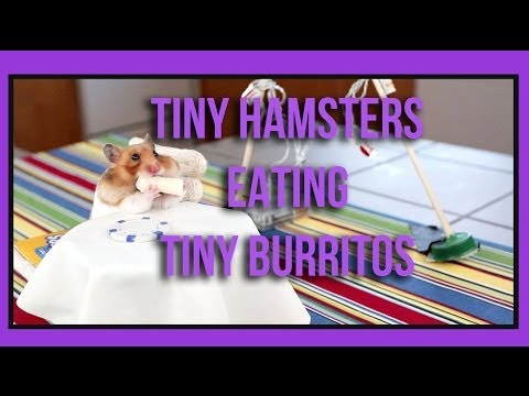 This Hamster Is Like In A Burrito Eating Contest