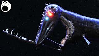 5 STRANGE Deep Sea Creatures - Part 1?