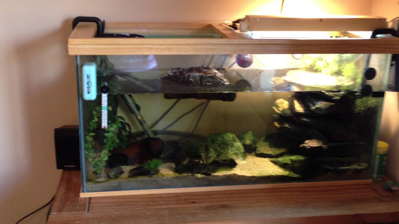 Mississipi Map Turtle Setup For Sale Youtube