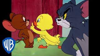 Tom y Jerry en Español Latino America | Lo Mejor del Pequeño Patito | WB Kids