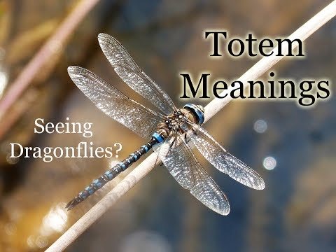 The Meaning of Seeing Dragonflies: Animal Totems: Dragonfly Symbolism