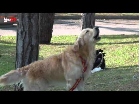 Tumori in cani e gatti