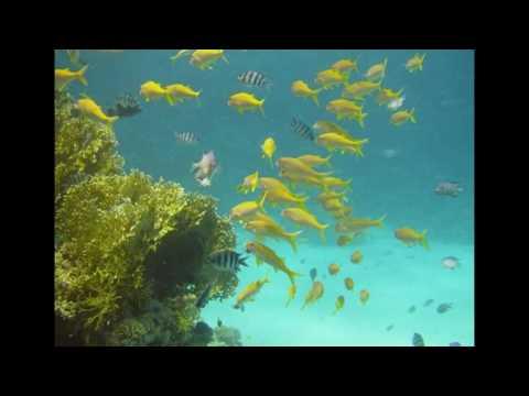 Paquetes mar rojo en Egipto