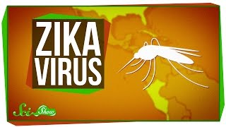 Zika Virus: What We Know (And What We Don39t) -