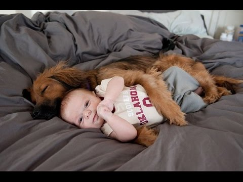 Funny Dogs Protecting Babies Compilation (2015)