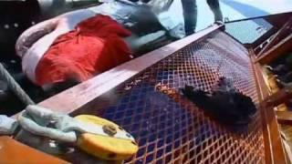 Documental tiburon blanco parte 6