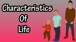 Characteristics Of Human Life