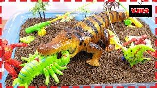 Siêu nhân gao câu cá cho cá sấu khóc nhè đói bụng - Đồ chơi trẻ em