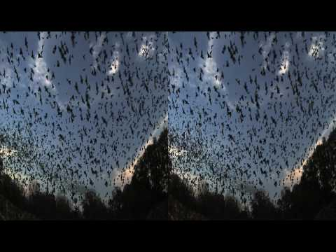 Bats. (Trailer - 3D Version)