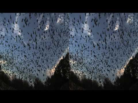 Bats. (Trailer - 3D Version)