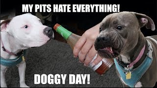 My Pitbulls HATE a lot of things! DOG DAY VLOG!