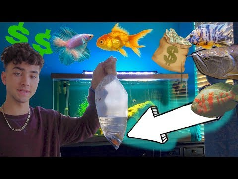 New COLORFUL AQUARIUM FISH!