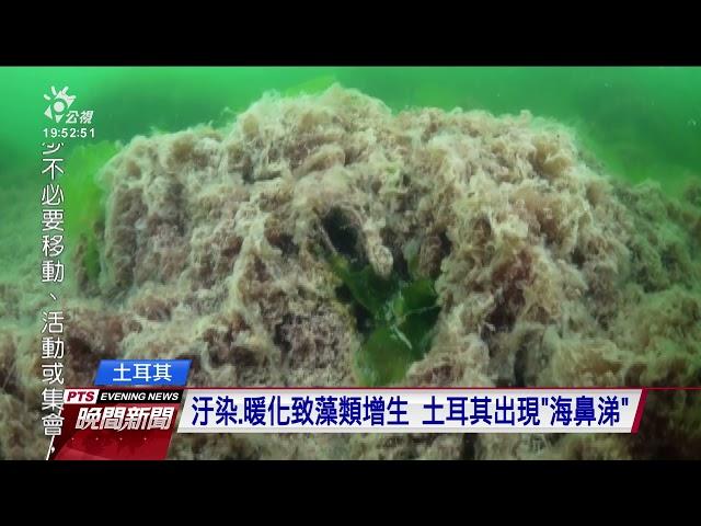 汙染、暖化致藻類增生出現「海鼻涕」 土耳其啟動清理計畫