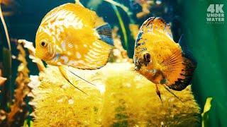 Best 4K Underwater Aquarium for Relaxation Sleep Meditation Music