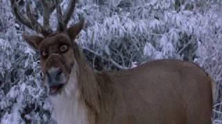 Comet The Reindeer 2