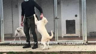 Video von YouTube anschauen