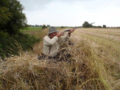 Caccia - Colombacci In irlanda - Ireland Pigeon Hunting - Chasse Pigeon