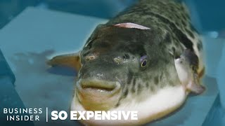 Why Tiger Fugu Is So Expensive | So Expensive